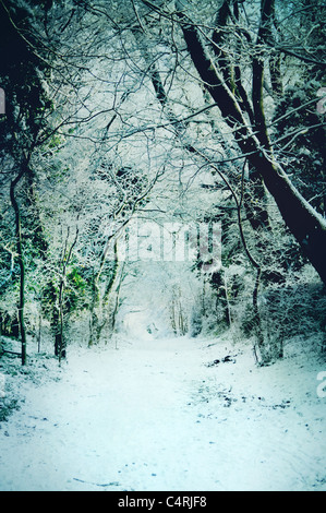 snow covered path through woods - Stock Image