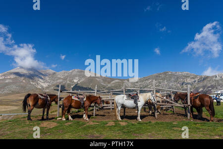 Horses coralled on the Campo Imperatore plateau grassland, Gran Sasso National Park, near L'Aquila, Abruzzo, Italy. - Stock Image