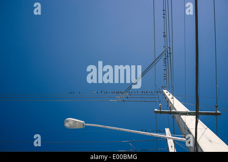 Birds resting on the cables of an electricity mast in Florida. - Stock Image