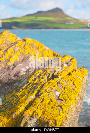Pembrokshire, St Davids Bay, Wales. Bright lichens on cliff top rocks with whitesand Bay mountain blurred out in the background. - Stock Image