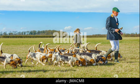 The East Lincs (Lincolnshire) Basset Hounds - The Huntsman, with a young helper and the pack of hounds away for the day hunting crossing meadow - Stock Image