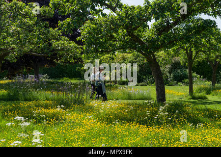 Two lady visitors to Kathy Brown's Garden walk through a meadow carpeted with Buttercups; Stevington, Bedfordshire, UK - Stock Image