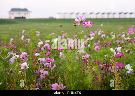 Goring By Sea, West Sussex. Sunday September 2nd 2018. UK Weather. There is a colourful start to the day in Goring By Sea, which is provided by the patches of flowers growing on the greensward which is only a short stroll away to the beach huts and the beach beyond. © Photovision Images News / Alamy Live News. - Stock Image