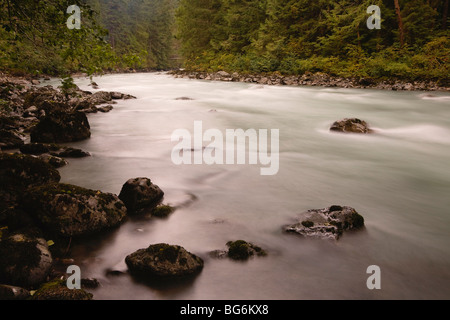 North Fork Nooksack River, Mt. Baker-Snoqualmie National Forest, Washington State, USA - Stock Image