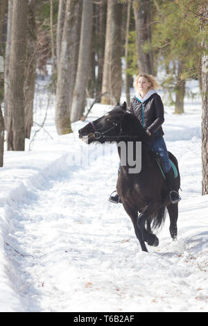 A winter forest. A young woman riding a horse - Stock Image