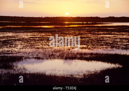 Everglades Florida Collier County Big Cypress National Preserve Tamiami Trail US freshwater marl prairie sunset - Stock Image