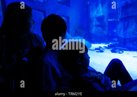 A mother and her two sons gaze into a blue lit tank in an aquarium on a day trip. - Stock Image