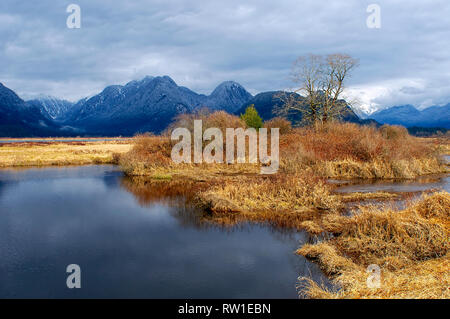 Pitt Polder snow-capped mountains with pond and dried grass in the foreground. - Stock Image