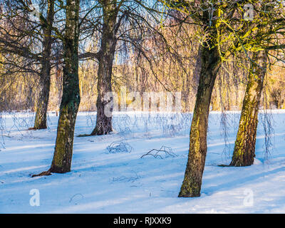 A snowy winter's day in Coate Water, Wiltshire. - Stock Image