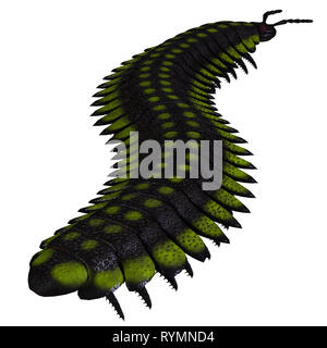 Arthropleura Invertebrate - Arthropleura was a carnivorous centipede insect that lived in North America and Scotland during the Carboniferous Period. - Stock Image