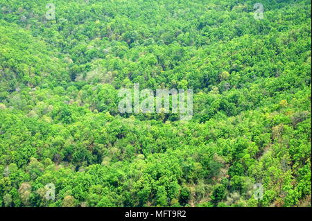 Top View of Green Forest Background. - Stock Image