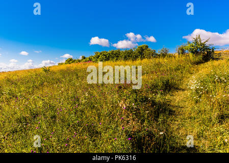 Early morning grass pathway at Sharpenhoe outcrop, Bedfordshire, UK - Stock Image