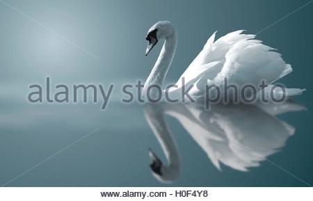 BLWX108383 [ (c) blickwinkel/McPHOTOx/Jostein Hauge Tel. +49 (0)2302-2793220, E-mail: info@blickwinkel.de, Internet: - Stock Image