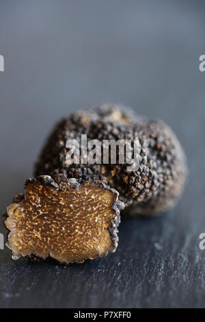 Fresh Black Summer Truffles, the diamond of the kitchen. - Stock Image