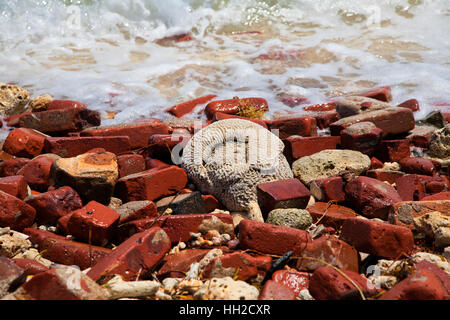Dry Tortugas National Park-Garden Key shoreline with scattered brick from Fort Jefferson with coral in the debri, - Stock Image