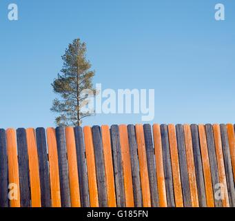 Orange black wooden fence, tree in background - Stock Image