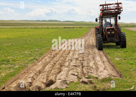 Hebridean croft farmer ploughing furrows in a field of traditional machair grassland using a tractor pulling a plough - Stock Image