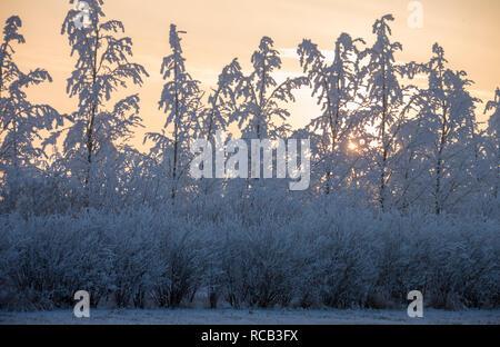Winter Frost Saskatchewan Canada ice storm sunrise - Stock Image