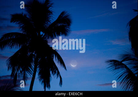 Moon over palm tree in Naples, Florida - Stock Image