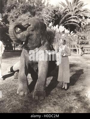 Young woman stroking elephant in zoo - Stock Image