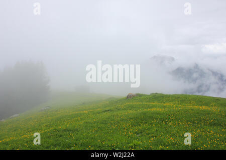 Green Meadow with yellow flowers. - Stock Image