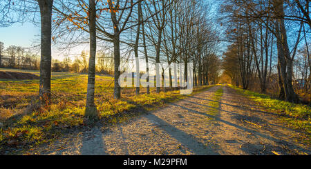 Fantastic sunset view of a forest pathway in Galicia, Spain. - Stock Image
