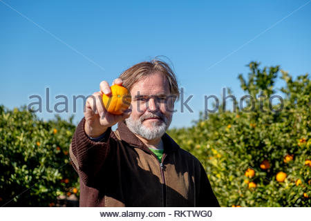 Farmer shows an orange in his field - Stock Image
