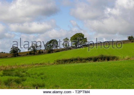Fields with trees on the horizon - Stock Image