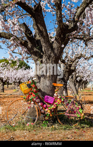 Jalon Valley, Costa Blanca, Spain, 12th February 2019.  A decorated bicycle leans against an almond tree in blossom in the Jalon Valley, Costa Blanca, Spain.  Credit: Mick Flynn/Alamy Live News - Stock Image