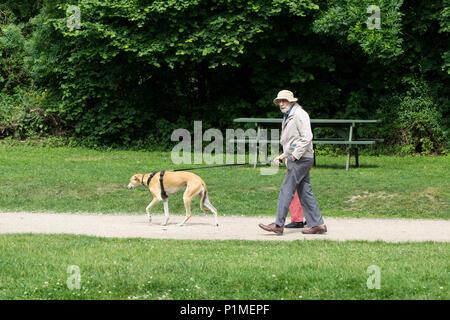 elderly couple taking pet greyhound for walk in park - Stock Image