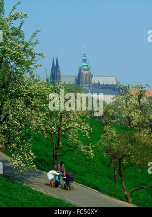 Family on walkway among apple trees in blossom on Petrin Hill in Prague with St Vitu s Cathedral and Hradcany Castle - Stock Image