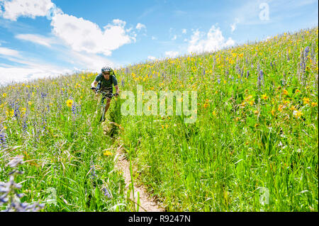 View of an adventurous mountain biker riding through a meadow with wildflowers, Crested Butte, Colorado, USA - Stock Image