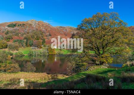 Loughrigg Tarn Elterwater, Lake District National Park, Cumbria, England, UK, Europe. - Stock Image