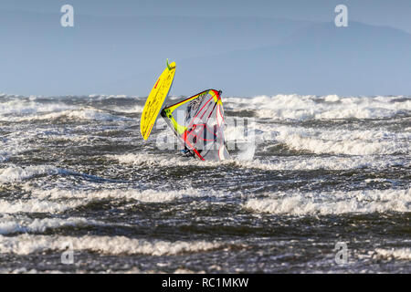 Firth of Clyde, Troon, Scotland. 13th January 2019. In the strong gales blowing across the Firth of Clyde, with wind speeds in excess of 50mph, members of the local windsurfing club from Troon, Ayrshire like to show off their skills and balance. Sometimes their acrobatic manoeuvres are impressive and sometimes don't quite end up as they would want! Credit: Findlay/Alamy Live News - Stock Image