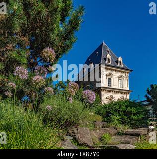 Italy Piedmont Turin Valentino botanical garden - View with Valentino castle - Crassullaceae - Sedum Spurium Bieb. - Stock Image