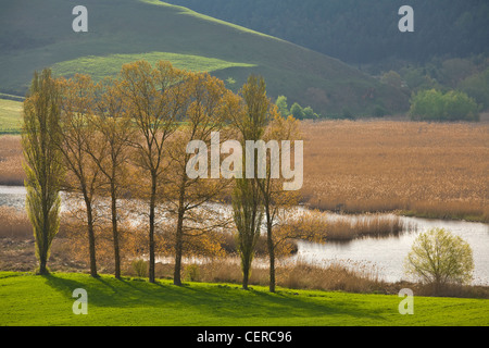 Marsh of Colfiorito, a natural wetland on a Karst Plain in the Central Apennines, east of Foligno, Umbria, Italy - Stock Image