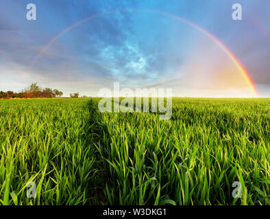 Spring Green field - Stock Image