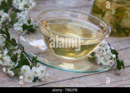 Tee aus Weißdornblüten, Weißdornblütentee, Weißdorn-Blütentee, Blütentee, Kräutertee, Heiltee, Weißdorn-Blüten, Weißdorn, Weissdorn, Weiß-Dorn, Weiss- - Stock Image