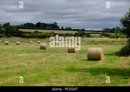 Topsham, Devon, UK. Hay bales stored in a field - Stock Image