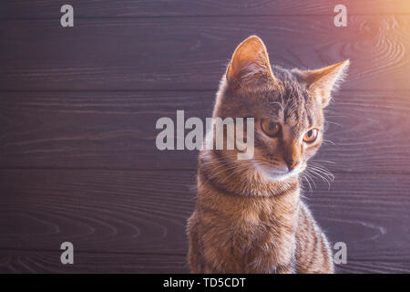 Muzzle young kitten close-up on wooden background portrait - Stock Image