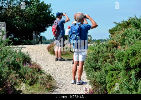 Arne nature reserve, UK. 28th Aug, 2017. UK Weather: Beautiful weather in Arne nature reserve on Bank holiday Monday Arne nature reserve, UK. 28th Aug, 2017. UK Weather:. Credit: Ajit Wick/Alamy Live News - Stock Image