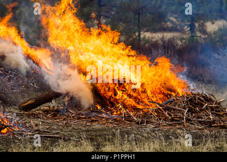Forest fire prescribed burn; Dairy, Oregon, United States of America - Stock Image