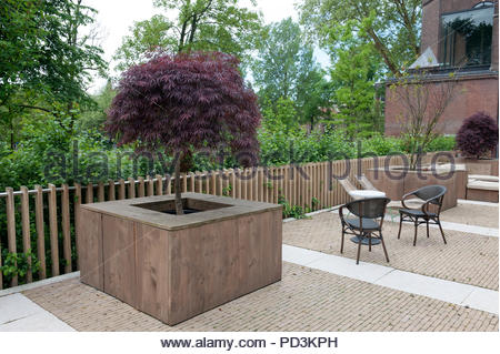 Design element Acer in a wooden container on a bar terrace. - Stock Image