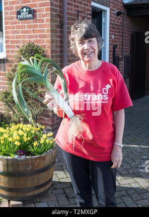 Smiling older female gardener holding a large leek, England, UK - Stock Image