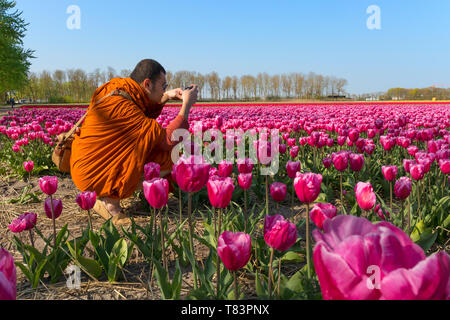 Lisse, Holland - April 18, 2019: Buddhist monk photographing the traditional Dutch tulip fields with rows of pink, red and yellow flowers - Stock Image