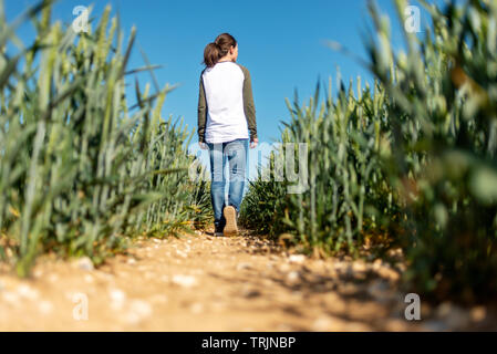 Back view of a woman walking through a field of green wheat, blue sky. - Stock Image