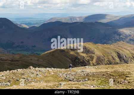 Walker Climbing up towards Dove Crag with the Ridge of Hartsop Above How below and the View North Over Angle Tarn Pikes to the Pennines, Lake District - Stock Image