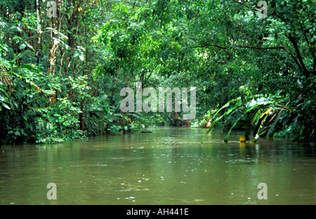 Tortuguero Canal, Costa Rica Rainforest - Stock Image