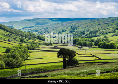 View to valley of Buttercup fields with barns and stone walls. Thwaite, Upper Swaledale, Yorkshire Dales National Park, North Yorkshire, England, UK - Stock Image