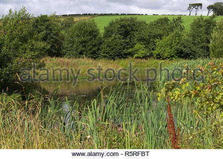 Green fields with trees, grass and blue sky. - Stock Image